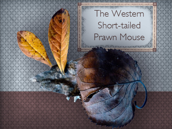 The Western Short-tailed Prawn Mouse